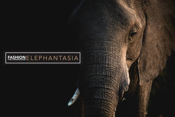 Elephantasia cp .jpg